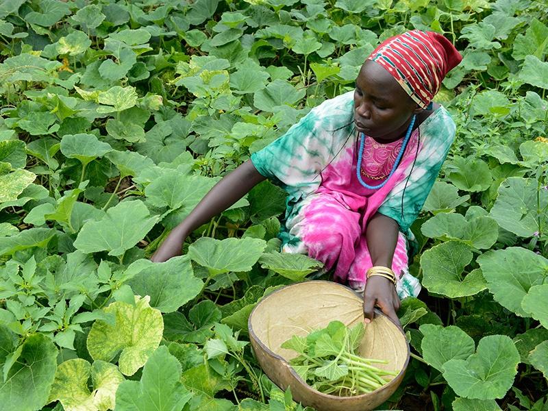 Im äußersten Westen Äthiopiens unterstützt Brot für die Welt Familien dabei, Mais, Bohnen oder Kürbisse anzubauen. Foto: Jörg Böthling/ Brot für die Welt