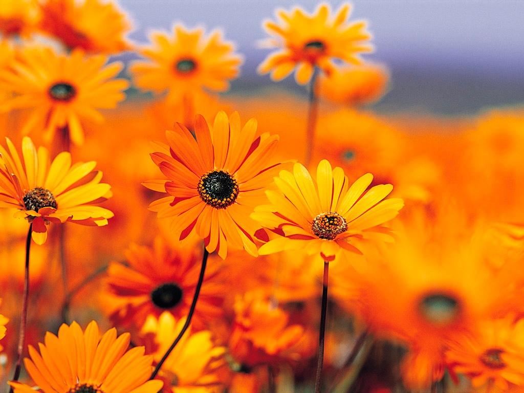1. Mai- Tag der Blumen und der Arbeit