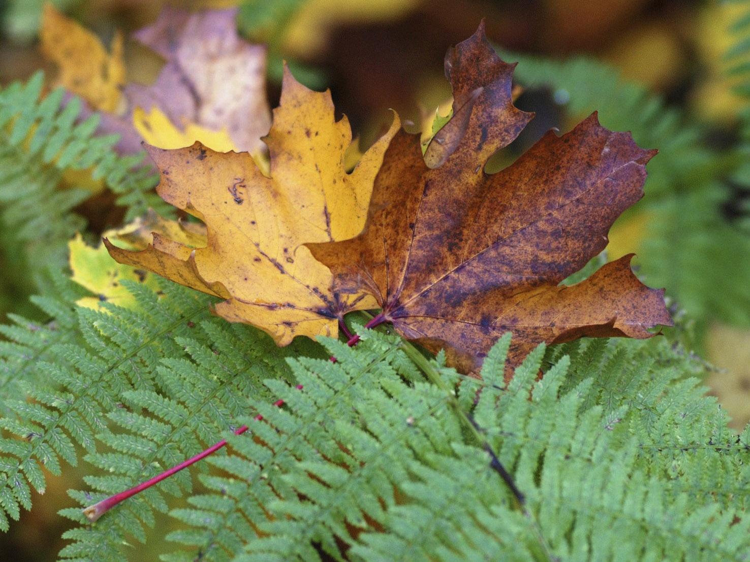 Herbstklima
