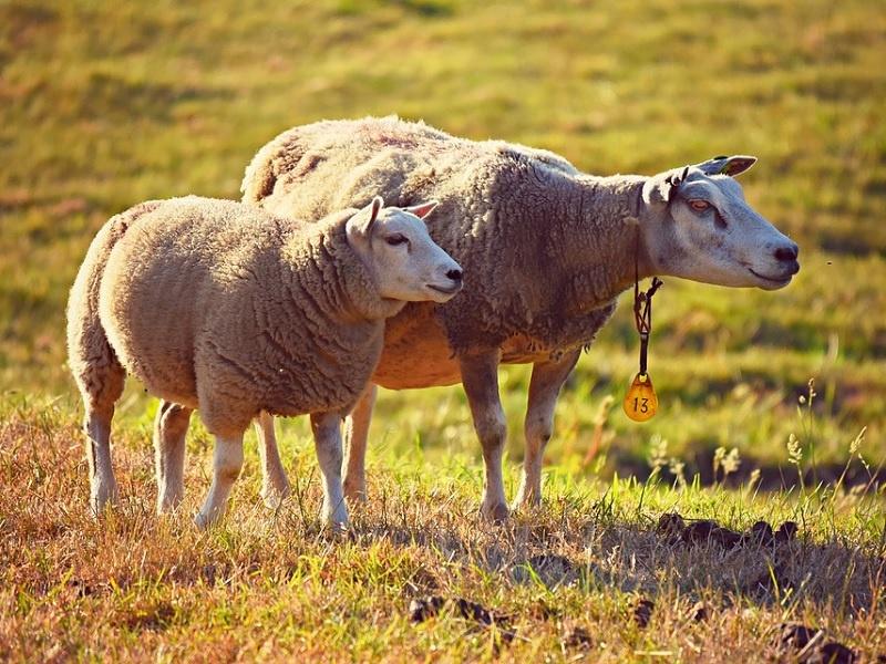 Gott ist auch 'im finstren Tal' für uns da, wie ein Hirte, der seine Schafe leitet, begleitet und beschützt.