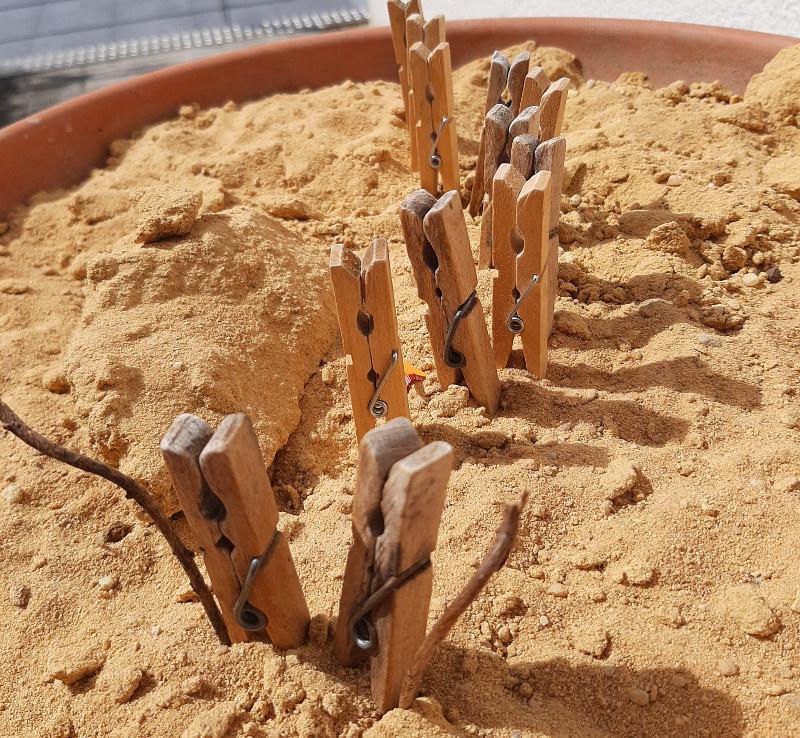 Kindergottesdienst von zuhause - Unterwegs in der Wüste